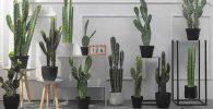 comprar cactus artificiales