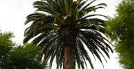 comprar palmeras artificiales