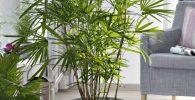 comprar plantas artificiales grandes