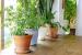 precios de plantas artificiales baratas